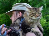 Ianto - kot norweski leśny