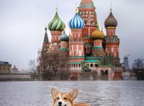 Marfa - welsh corgi pembroke, Plac Czerwony w Moskwie
